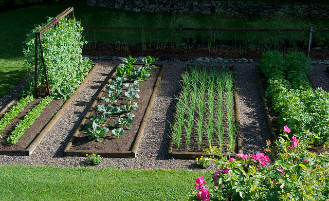 All about gardening: How to Start Your Organic Garden from ...
