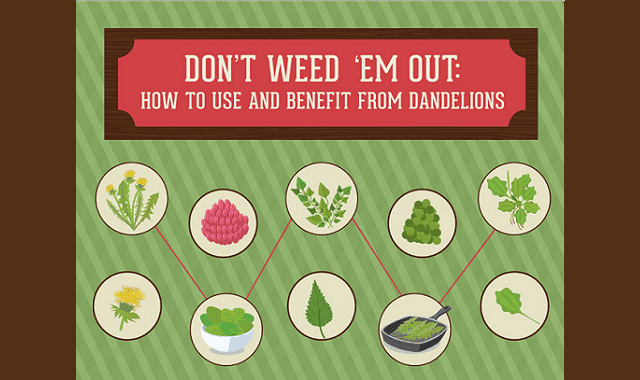 Don't Weed 'Em Out: How to Use and Benefit from Dandelions