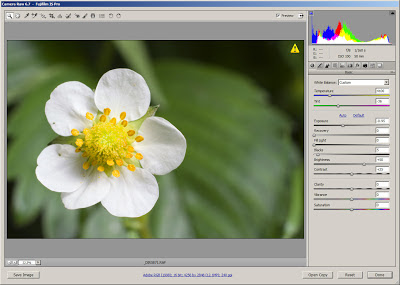 Processing visible light flower photo in Adobe Camera RAW (ACR)