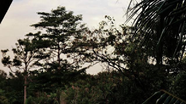 Изображение джунглей на острове Ко Чанг