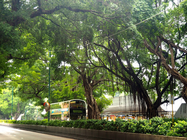 Nathan Road overhung with trees & branches in TST, Kowloon, Hong Kong