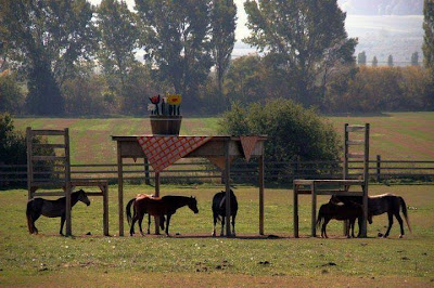 Horses standing in a field with a huge table and chairs built over them