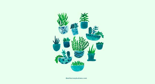 Las 5 plantas que debes de tener en este inicio de año
