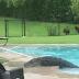 AYY MÍ MADREE!! Un cocodrilo de casi tres metros 'visita' la piscina de una familia en EE.UU.