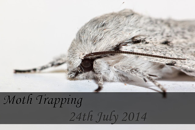 Moth trapping 24th July 2014