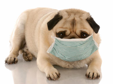 Food Allergies in Dogs Skin