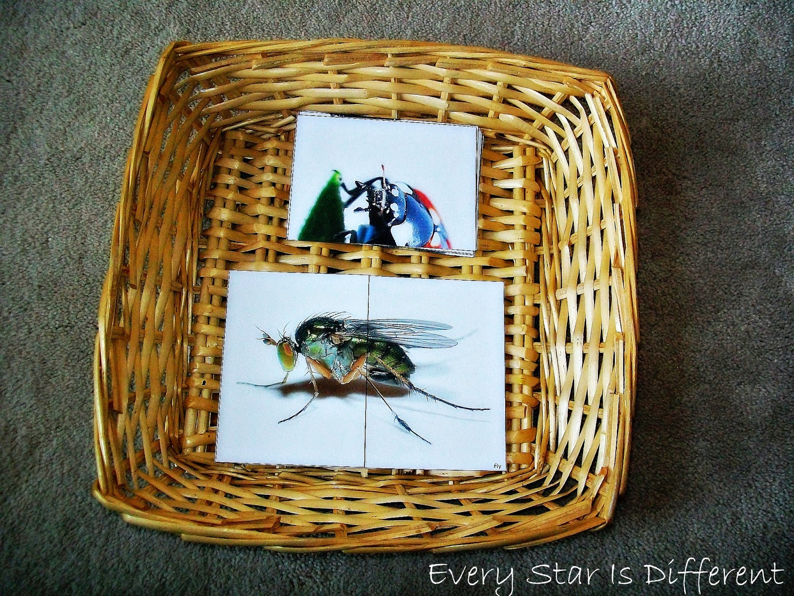 Insect Two Piece Puzzles for Kids (free printable)