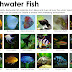The Difference Between Aquarium Fish Species of Freshwater and Saltwater