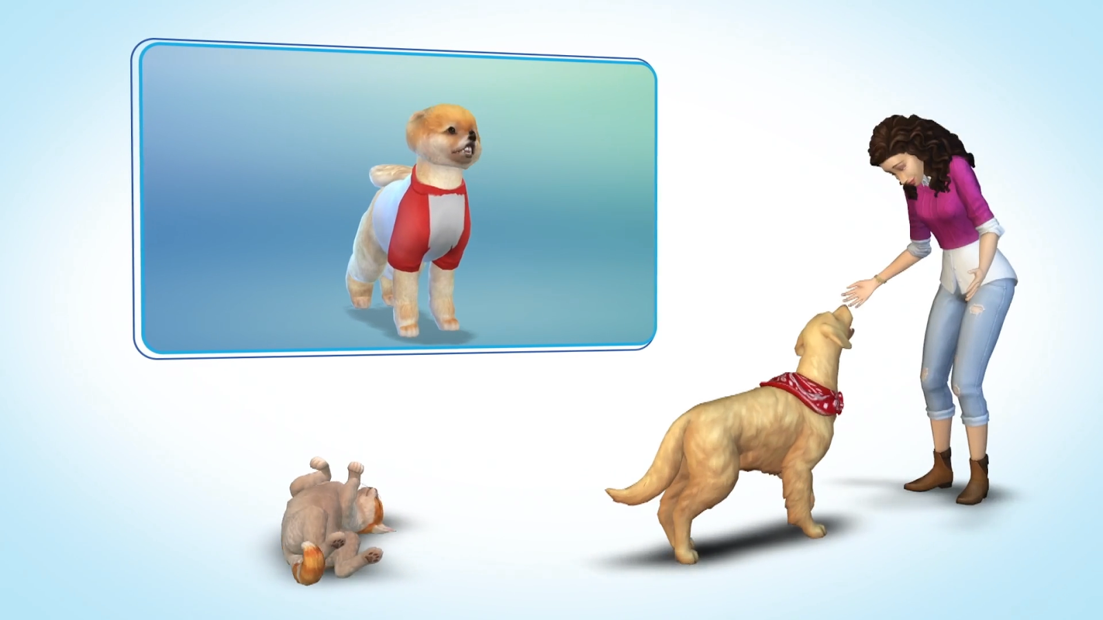 Sims  Supported Cards Cats And Dogs