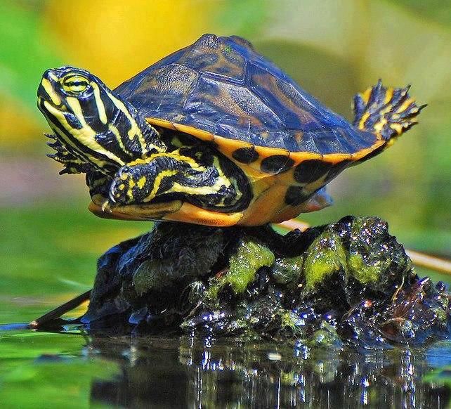 TurtlesRainbow
