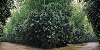 dedalo di canne di bambù