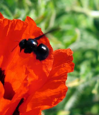 Bienen|Deutschland summt|