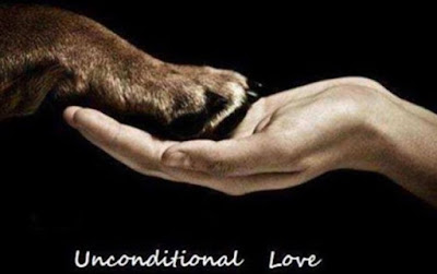 The Unconditional Love Of An Animal