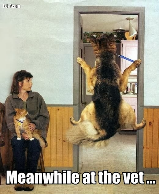 Meanwhile at the vet... dog refuses to go inside