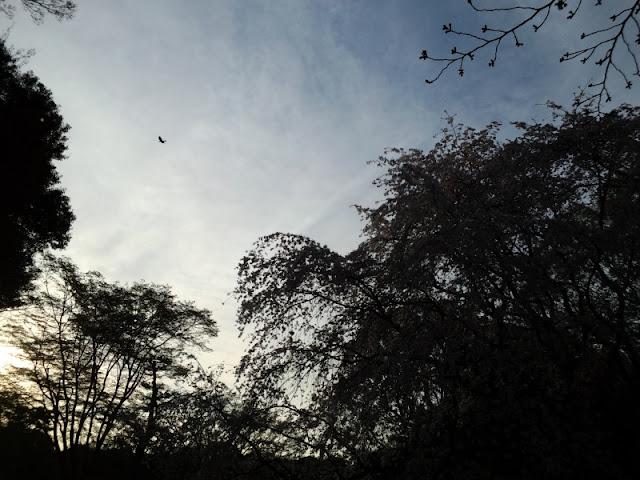 六義園の夕方の空模様です。晴れていて鳥が飛んでいてとても綺麗でした。