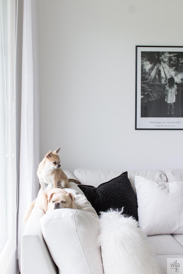 chihuahua, interior, olohuone, sisustus