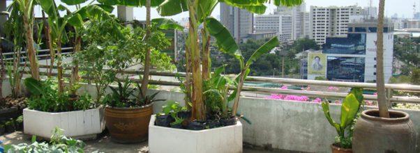 Berkebun sayuran dengan berbagai model yang berbeda dan unik