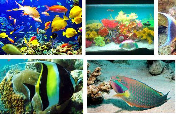 Jenis Ikan Laut Hias Aquarium
