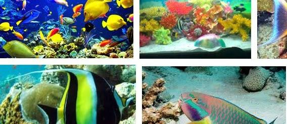 44 Jenis Ikan Laut Hias Aquarium Cantik Harga Termahal