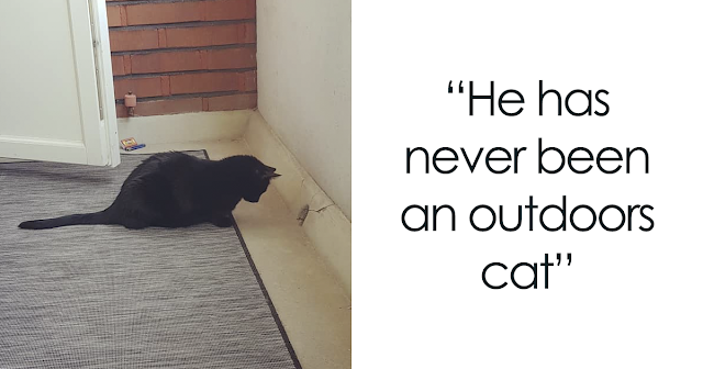 People Are Laughing At The Way This Cat Reacts To Being Allowed On The Balcony For The First Time