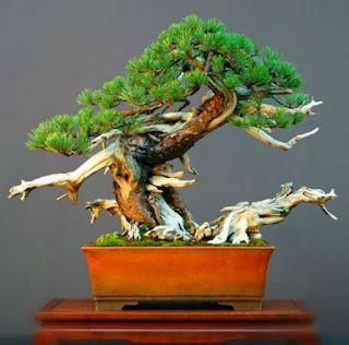 teknik-dasar-membuat-bonsai.jpg