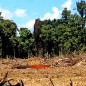 Batu Mustika Tanah Papua Asli