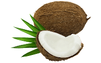 coconut clipart png