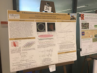 My poster with Debabrata Auddya, at the Mechanics in Morphogenesis workshop at Princeton University.
