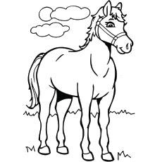 Printabe Horse Coloring Sheet Ideas