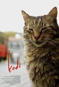 Kedi Film Istanbul Trailer (2017) 1080p Full HD