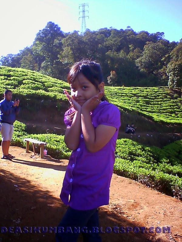 Wisata Kebun Raya Cibodas di Kaki Gunung Gede