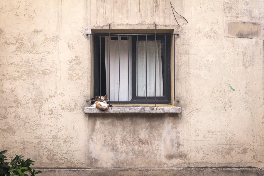 Cats in Windows | Ñuñoa