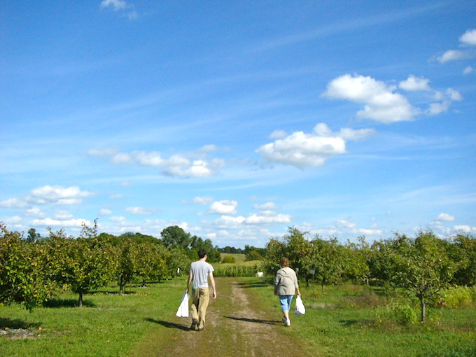 apple jack orchards in delano minnesota