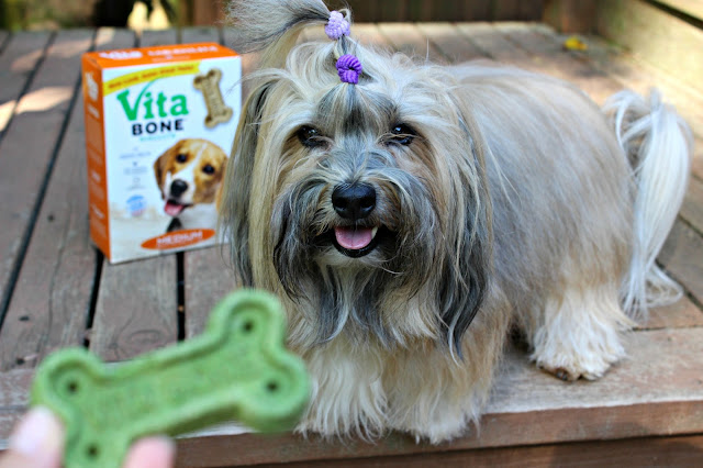 Vita Bone Rocco Havanese treat-based positive reinforcement training