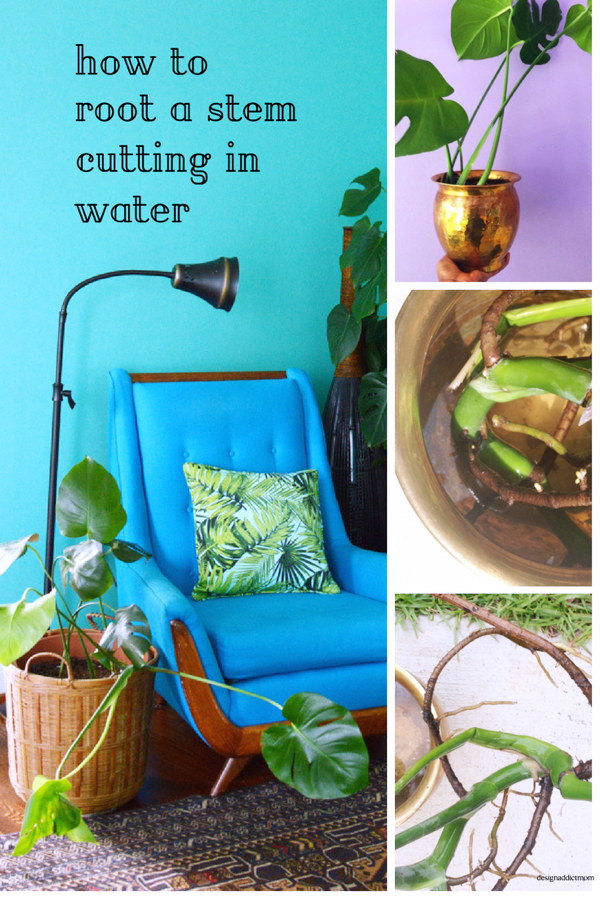 Spring is in the air and it's time to get your hands dirty and do all the plant things-design addict mom