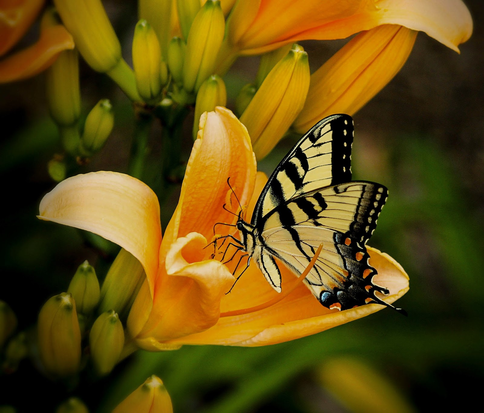 Imágenes De Mariposas Y Flores Hermosas Fotos Reales