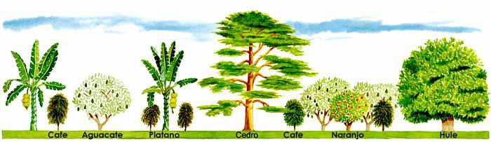Puertas a la imaginaci n los rboles for Lista de arboles frutales de hoja perenne