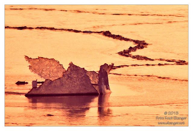 Isfugl i solnedgang :-)