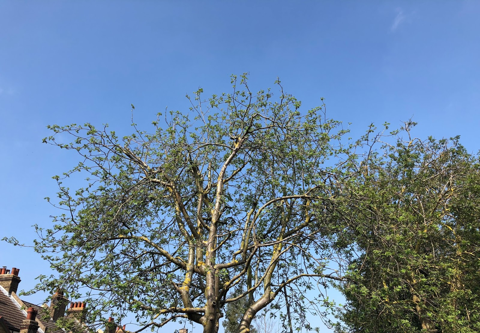 Blue sky and tree branches