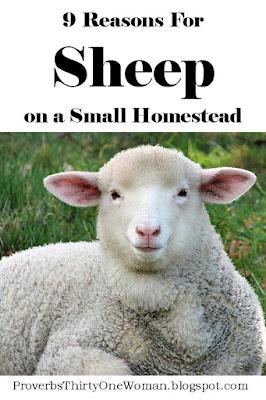 Why Raise Sheep