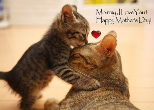 happy-mothers-day-wishes-for-mum-from-son