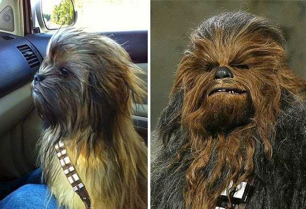 dog-looks-like-1