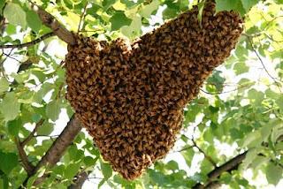 Jual madu hutan asli lempnilo