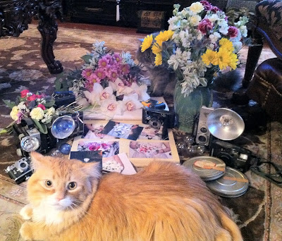 Photography cat Phillip - Stein Your Florist Co.
