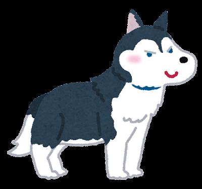 シベリアン・ハスキーのイラスト(犬)