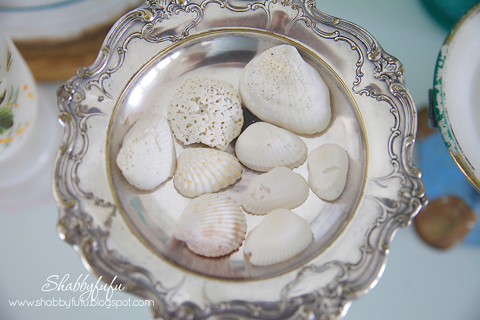 white-seashells