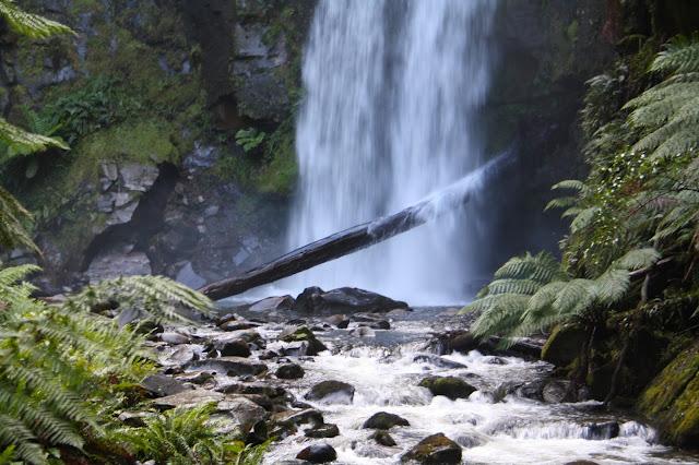 Hopetoun Falls, Beech Forest