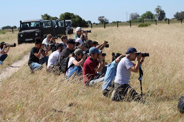grupo de personas haciendo fotografías agachadas en el Parque Nacional de Doñana