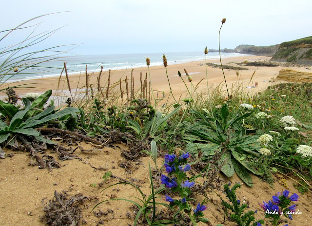 Playa de Canallave. Viajar a la Costa Quebrada. Qué ver en la Costa Quebrada