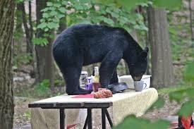 POLL: Should the Louisiana black bear be kept on the